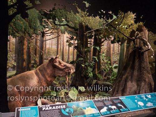 extreme-mammals-091017-033-C-500px