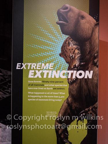 extreme-mammals-091017-045-C-500px